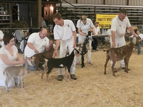 Iowa Dairy Goat Association Spring Classic